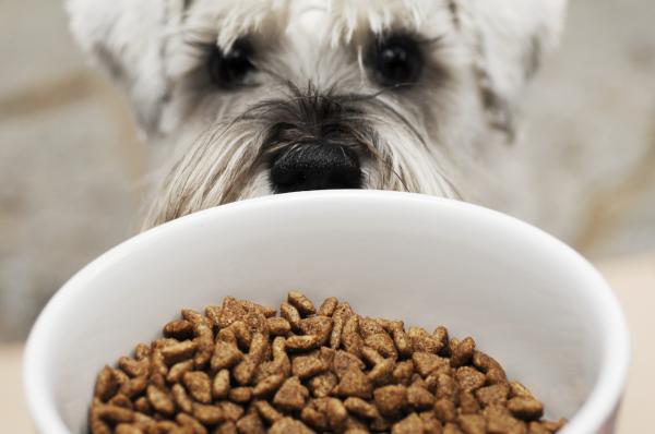 Balanceado para perros, la calidad extiende su bienestar: 3 ventajas clave